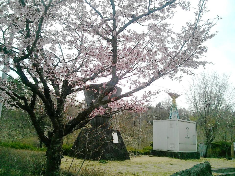 20130420sakura