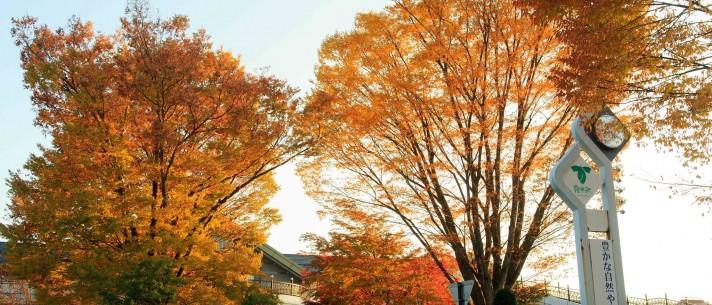 » 10/31-11/8 旧軽井沢さわやかバザール開催!