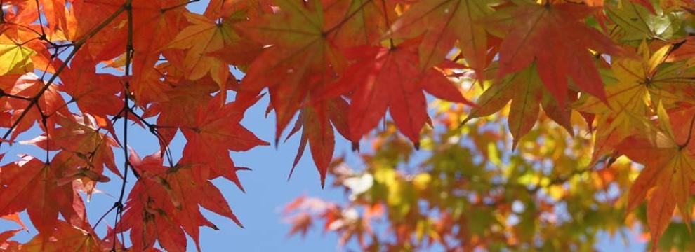 軽井沢の秋 3