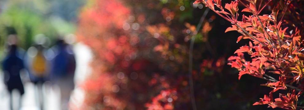軽井沢の秋 4