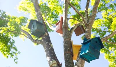 » 「巣箱ツリー」や「バードシルエット」が彩るイロトリドリの街/軽井沢星野エリア