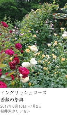 2017tokusyu4_taliesin1_230x400