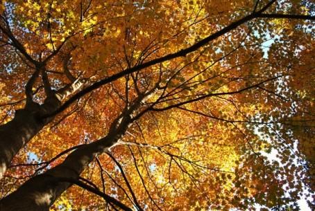 » 紅葉のピクチャレスク・ガーデンをお楽しみ下さい/ムーゼの森(ピクチャレスク・ガーデン)