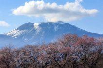 2021年 桜スポット特集/軽井沢の代表的な桜スポットをマップと共にご紹介