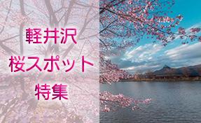 2021年 桜スポット特集
