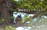 軽井沢フォトギャラリー