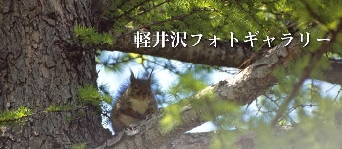 » 軽井沢フォトギャラリー