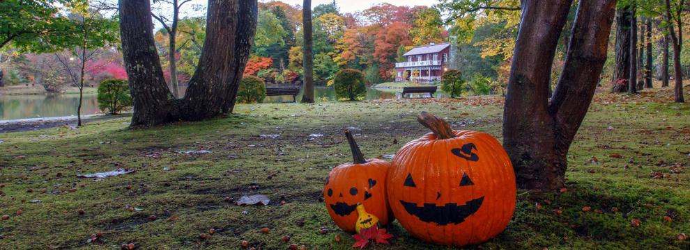 tariasen_pumpkin_koyo990