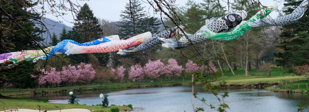 軽井沢の桜 3