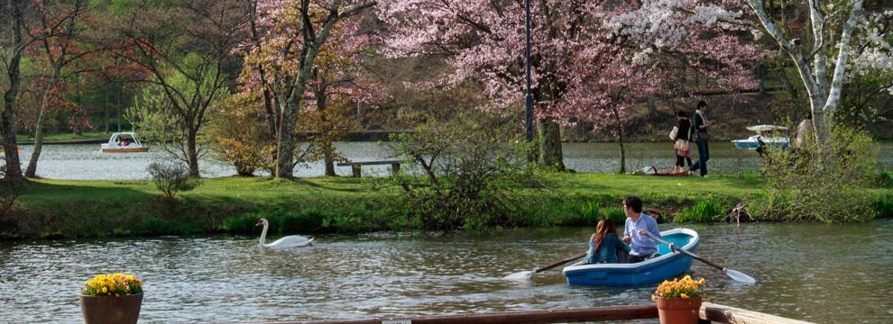 軽井沢の桜 2